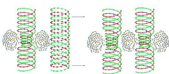 Обмен информацией между спиральными структурами пылевой плазмы