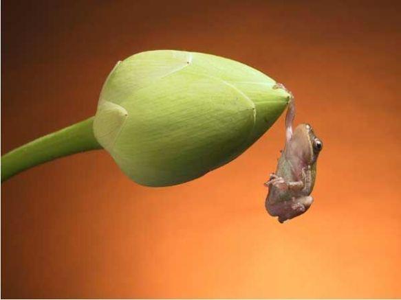 frog-n-flower