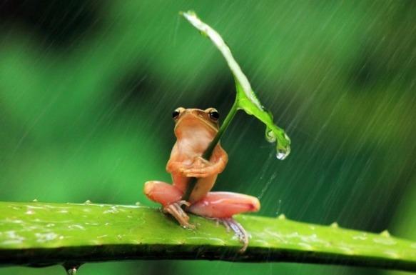 ewh-5-frog-umbrella