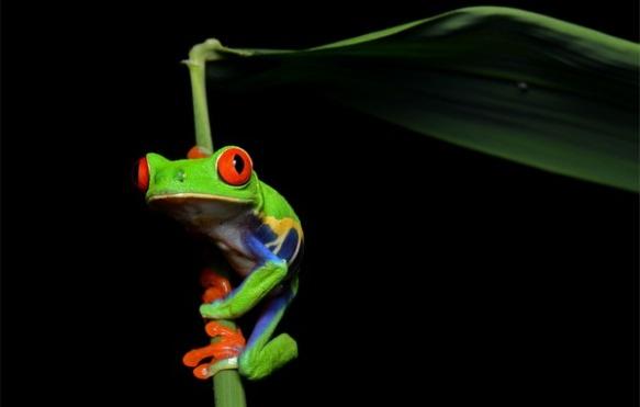 ewh-5-tree-frog