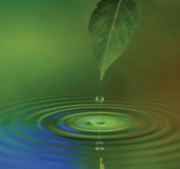 Leaf-drop