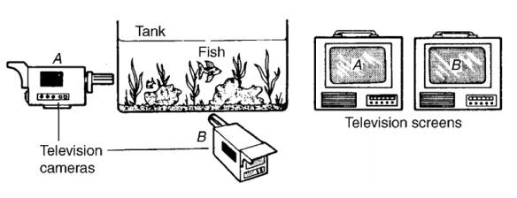 bohm-1-2-fish