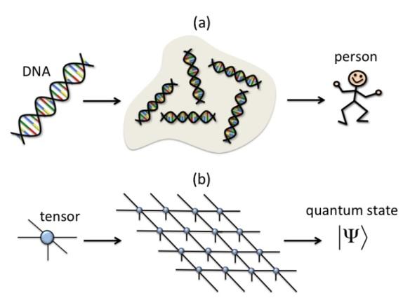 dna-tensor-network